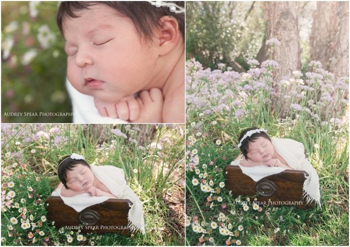 Larkspur-Newborn-Photography